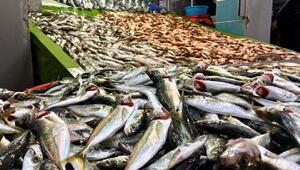 Karadenizde balıkçı tezgahları renklendi