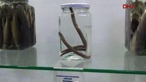 Rizede, dünya bilim literatürüne girmemiş balık türü keşfedildi