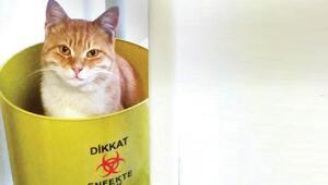 Acil servisteki 2 kedinin hikayesi