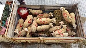 Mehmetçiğe kurbanlık koyun gönderdiler