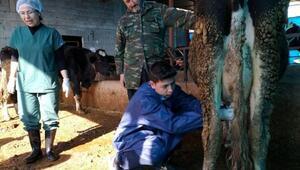 Veteriner adayları, hayvanlarda sağlık taraması yaptı
