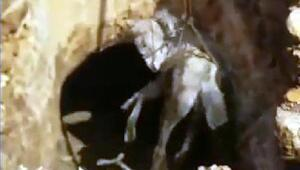 Mağaradaki çukura düşen at kurtarıldı