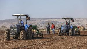 Büyükşehir'in dağıttığı tohumların ekimine başlandı
