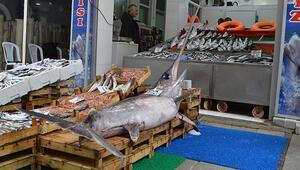 Balıkçıya kılıç piyangosu... Tam 2,5 metre uzunluğunda ve 7 bin lira