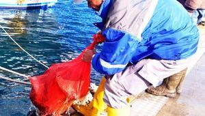 Gümbette dalgıçlar 615 kilo atık çıkardıkları denizden Afrin mesajı verdi