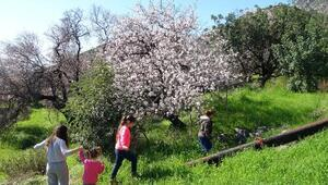 Anamurda ağaçlar çiçek açtı