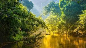 Dünyanın oksijen kaynağı: Amazon yağmur ormanları