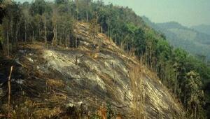 FAO: Ormanları yönetme şeklimiz gıda güvenliği için yaşamsal önemde