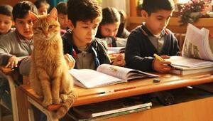 Tombiyi sınıfa döndüren müdür, müdürlüğün bahçesinde de kedi besliyor
