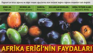 Pygeum (Afrika Eriği) nedir Afrika Eriğinin faydaları