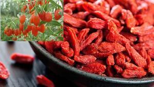 Goji berry (kurt üzümü)  faydaları neler Goji berry çayı nasıl yapılır