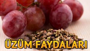Üzüm nedir Üzüm tohumunun faydaları neler