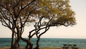 Trakya'nın kuş cenneti: Gala Gölü Milli Parkı