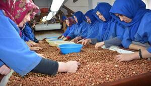 Kadın fındık işçilerinden Mehmetçiğe destek