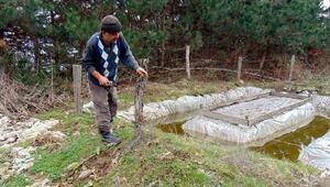 Mudurnu'da  'çam kese böceği ile mücadele