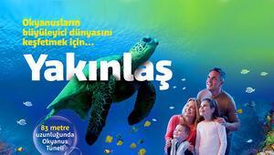 İstanbul'daki köpekbalıkları hayrete düşüyor.