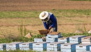 Havaların ısınmasıyla arı kovanları açıldı