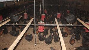 Çiftlik Bankın Sakaryadaki tesislerinde arama yapıldı