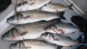 Bandırmada 10, Balıkesirde 60 lira Kilometre farkı cep yakıyor