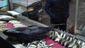 Akdenizde avlandı, Trabzonda satışta... Yaklaşık 40 kilo...