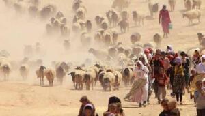 FAO: Doğal afetler tarımda 96 milyar dolar zarara neden oldu