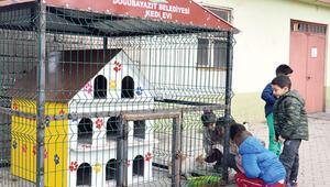 Kafesli kedi evi
