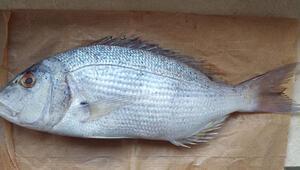 Çiftlikte yetiştirdiği balıklarla ihracatçı oldu