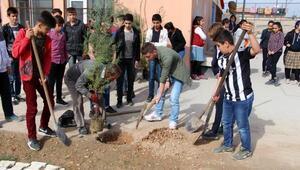Silopili öğrenciler, Zeytin Dalı Harekatı şehitleri için fidan dikti