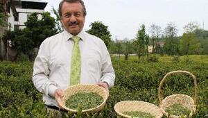 Doğu Karadenizde üretilen çayın tüketildiği ülke sayısı 110a ulaştı