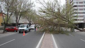 Kayseride fırtınada ağaçlar kökünden söküldü
