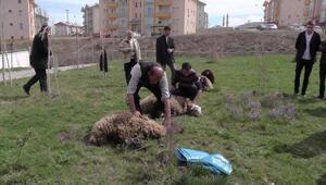 Muşta Afrin şehitleri için kurban kesildi