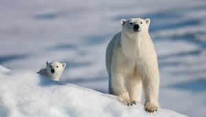 Dünya Doğal Hayatı Koruma Vakfı'nın raporuna göre yok olma sınırındaki 10 hayvan türü