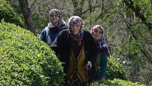 Orman vasfı taşıyan arazilerinin tapuları iptal edildi