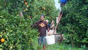 Finike portakalına duble yol tehdidi