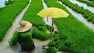FAO Gıda Fiyat Endeksi ikinci ayda da yükseldi