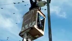 Elektrik teline takılan kuşukurtarma operasyonu