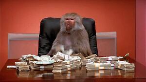 Para konusunda maymunlardan ne öğrenebiliriz