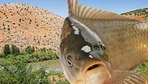 Balıkları stresten kurtaran iptal