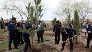 Ahlat'ta Şehitler Ormanı kuruldu