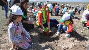 10 bin meşe palamudu toprakla buluşturuldu
