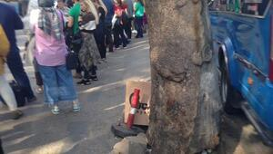 Güvenpark'ta ağaç tehlikesi