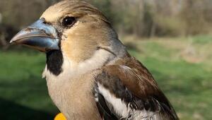 25 türden 168 kuşa kimlik halkası