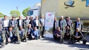 Gaziantepte 50 bin zeytin fidanı dağıtılıyor
