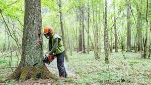 Adalet Divanı, ağaç kesen Polonya'yı haksız buldu