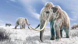 Nesli tükenen hayvan klonlarından hayvanat bahçesi