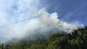 Çayelinde ormanda örtü yangını