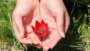Yılda bir kez açıyor... Bu çiçeği koparan yandı  48 bin lira cezası var