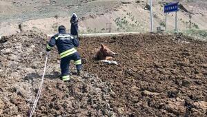 Gübre yığınına saplanıp mahsur kalan atı, itfaiye kurtardı