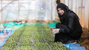 FAO: Tarıma yatırım Suriye'nin geleceği için hayati önemde