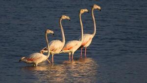 Beyşehirde, kuş türleri çok yakından gözlemlenebiliyor